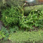 Shade Garden, Summer 2104