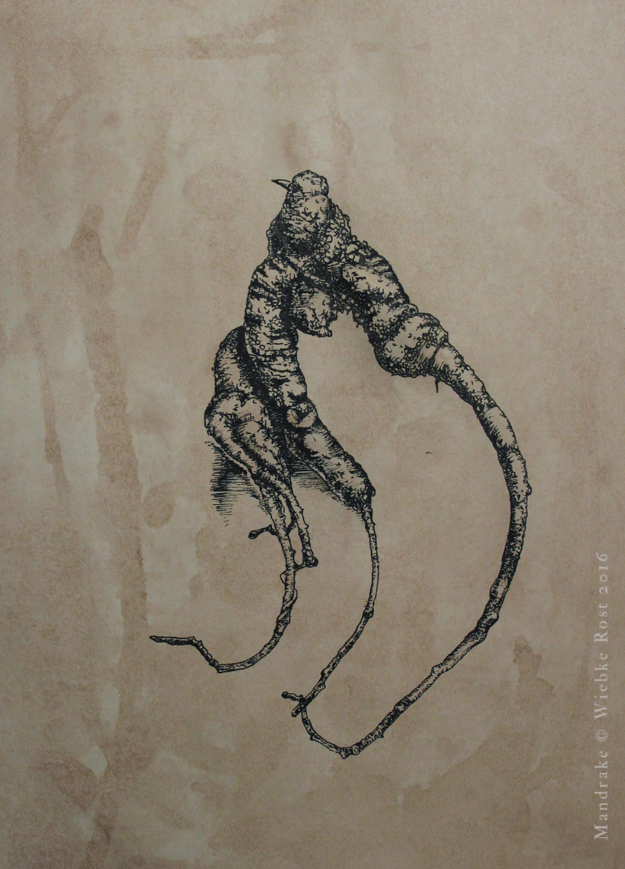 Mandrake #5