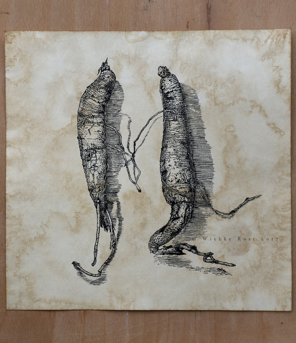 """Duo"", Autumn Mandrake roots, Sept. 2017"