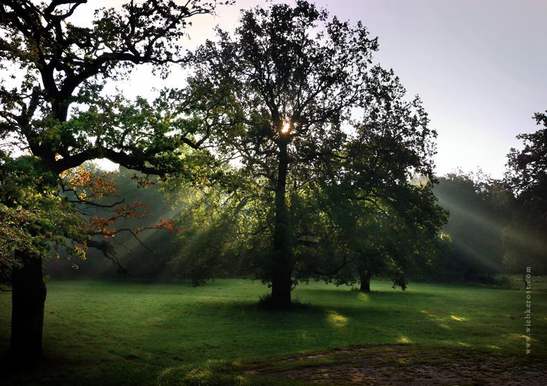 Sunrise behind Oak, 2017