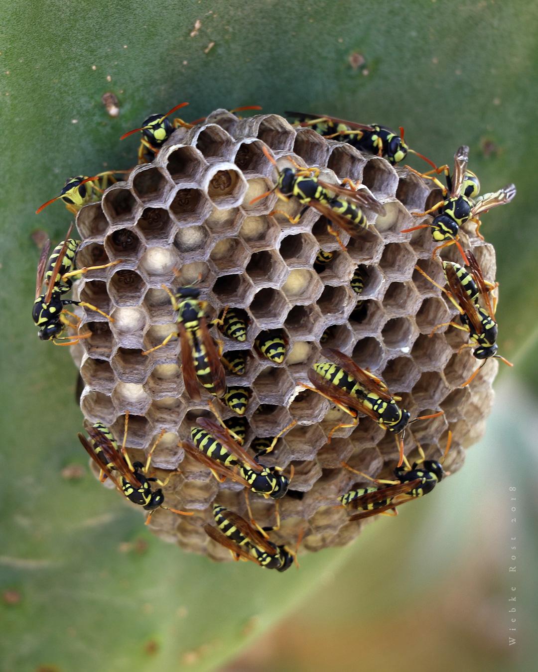 """""""Wasp Nest"""""""